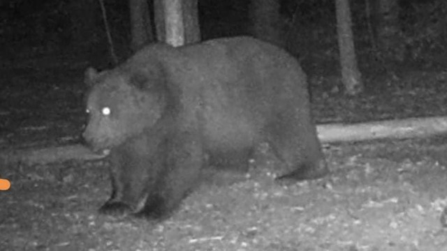 Граждани се обединяват срещу отстрела на мечката в Белица