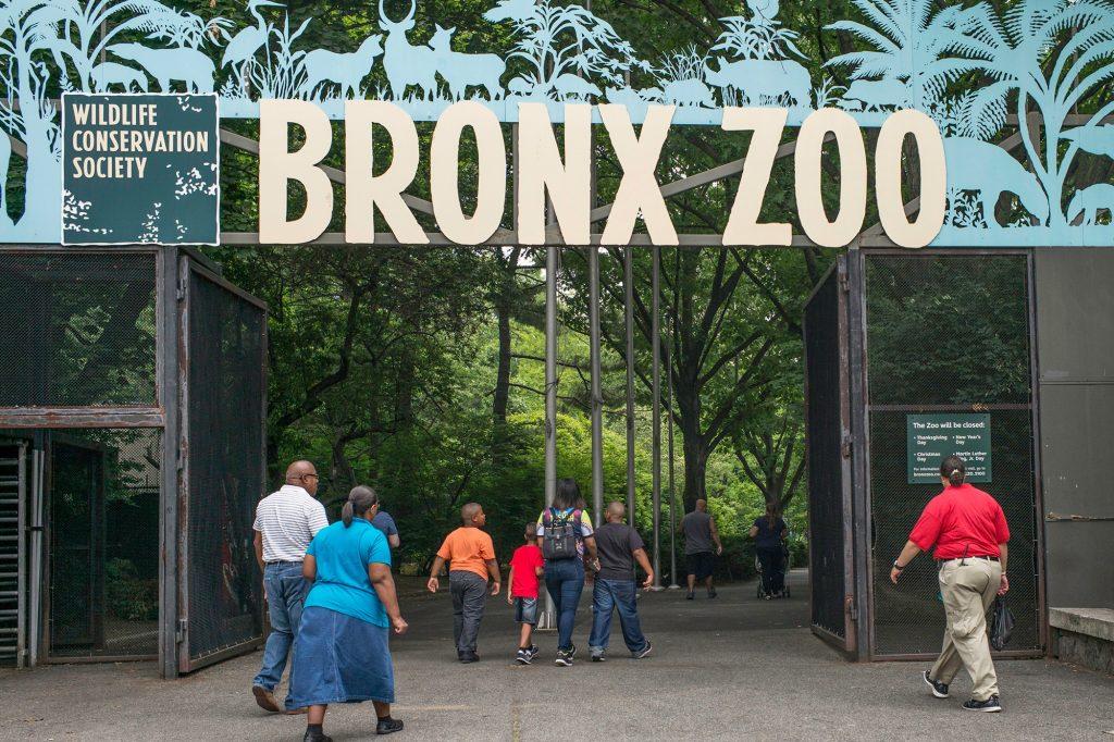 Горили в зоопарка в Бронкс шокираха посетителите с орален секс