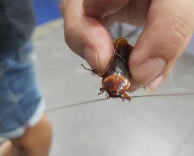 Мъж заведе на ветеринар ранена хлебарка, намерена на улицата